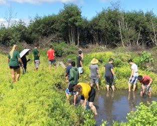 PLAN 101 & 310: Fishpond Site Visit